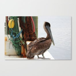 Pelican Waiting On Seafood Canvas Print