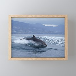 Wild and free bottlenose dolphin Framed Mini Art Print