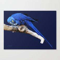 Persistant Canvas Print
