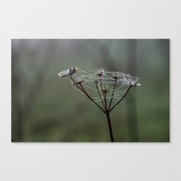Herb wet with dew Canvas Print