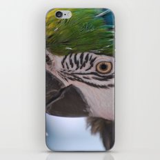 Beautiful Parrot Head iPhone & iPod Skin