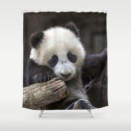 Baby panda climb a tree Shower Curtain