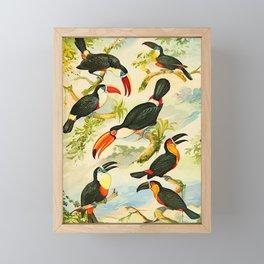 Album de aves amazonicas - Emil August Göldi - 1900 Tropical Colorful Amazon Birds Framed Mini Art Print