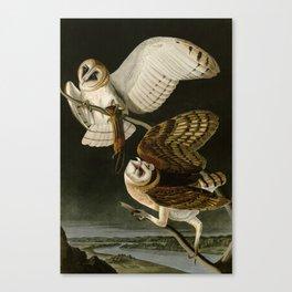 Barn Owl - Vintage Bird Illustration Canvas Print