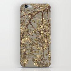 Under the Honey Locust Tree iPhone & iPod Skin