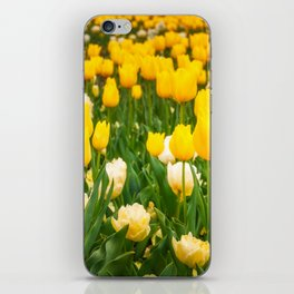 Yellow and white tulips in Canberra in Spring iPhone Skin