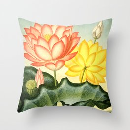 New Illustration Of The Sexual System : The Sacred Egyptian Bean Throw Pillow