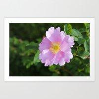 Elegant Bloom Art Print
