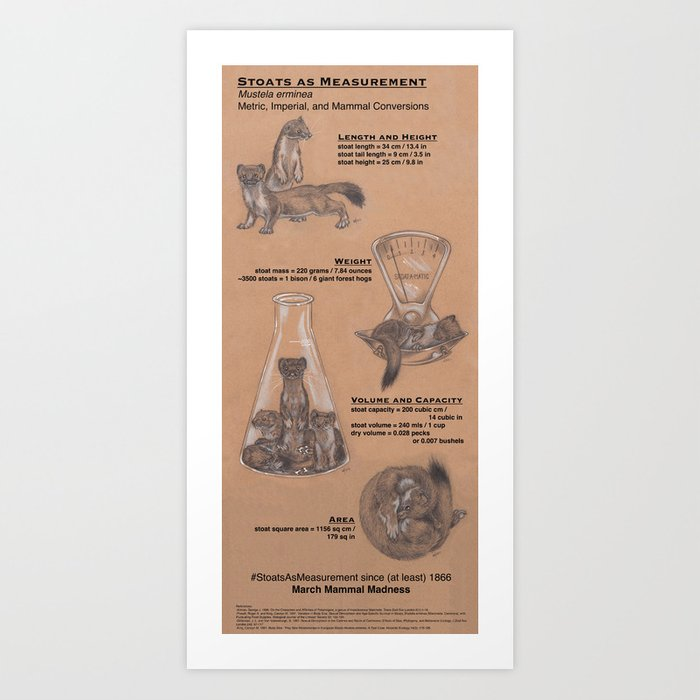 Stoats as Measurement Kunstdrucke