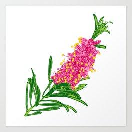 Beautiful Pink Australian Native Floral Illustration Art Print