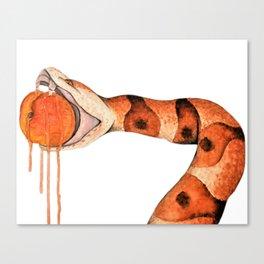 Copperhead Biting Peach Canvas Print