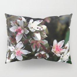 White stonecrop - Sedum Pillow Sham