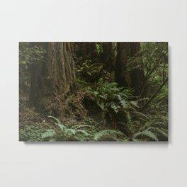 Redwood Forest Floor Metal Print