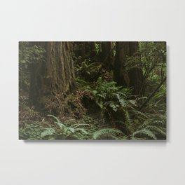 Redwood Forest Floor Metal Print