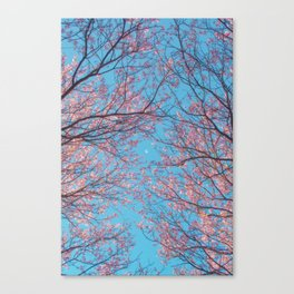 serotonin Canvas Print