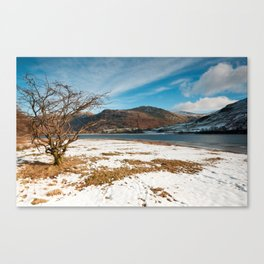Brother's Water Tree Canvas Print