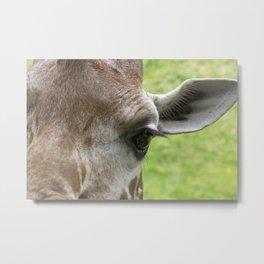 The Eye of a Giraffe Metal Print