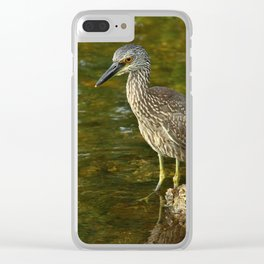 Juvenile Yellow Crowned Night Heron Clear iPhone Case