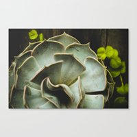 succulent Canvas Prints featuring Succulent by Olivia Joy StClaire