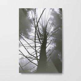 Benson Meadows Metal Print