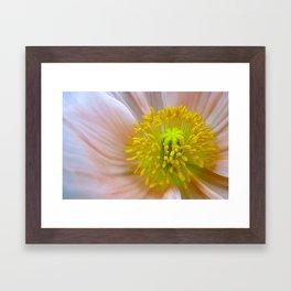Receptive: Pale Poppy Framed Art Print