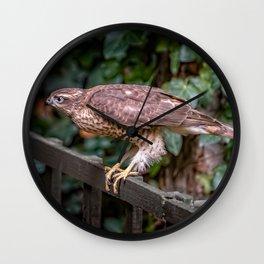 Sparrowhawk Wall Clock