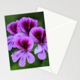 Rose Geranium (Pelargonium graveolens) Stationery Cards