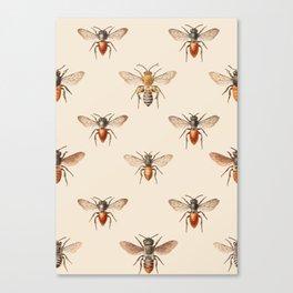 Vintage Bee Illustration Pattern Canvas Print