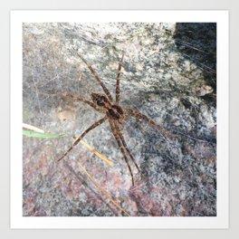 Watercolor Spider, Wolf Spider 01, Boulder, Colorado, Spindel Legs Art Print