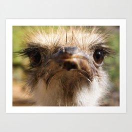 ostrich mug Art Print