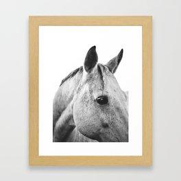 Silver Horse II Framed Art Print