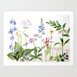Botanical Garden Flower Wildflower Watercolor Art Art Print