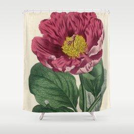 Daurian Peony / W. Curtis 1857 Shower Curtain