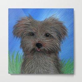 Scruffy Yorkie Dog Portrait Metal Print