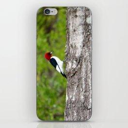 Red Head Bird iPhone Skin
