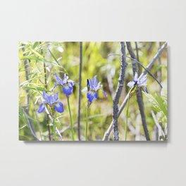 Northern Blue Flag Iris 1 Metal Print