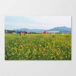 Rapeseed yellow flowers in Busan Canvas Print