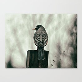 The Watch Bird Canvas Print
