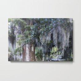 New Orleans Spanish Moss Metal Print