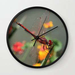 Red Skimmer or Firecracker Dragonfly With Lantana Background Wall Clock
