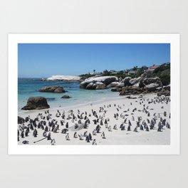 Boulders Beach, South Africa Art Print
