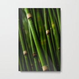 Bamboo pattern Metal Print