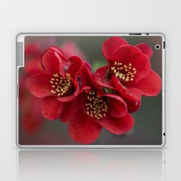 Red Chaenomeles flowers Laptop & iPad Skin