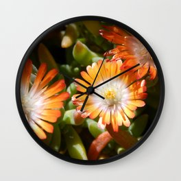 Ice plant Wall Clock