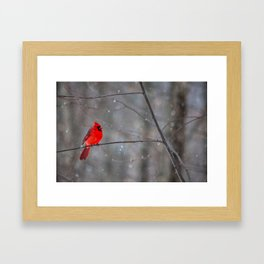 Cardinal In the Snow Framed Art Print