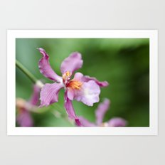Orchid Beauty (2) Art Print