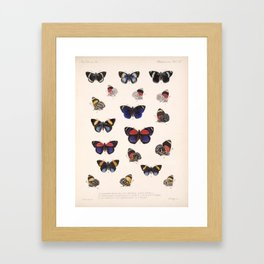 Vintage Hand Drawn Scientific Illustration Insects Butterfly Anatomy Colorful Wings Framed Art Print