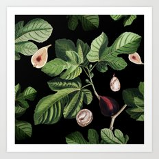 Figs Black Art Print