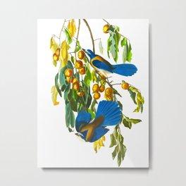 Florida Scrub Jay John James Audubon Vintage Birds Of America Illustration Metal Print