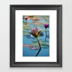 Lotus Blossom Flower 13 Framed Art Print
